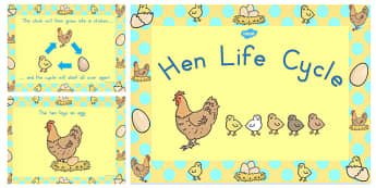 Chicken Life Cycle PowerPoint - australia, chicken, life cycle