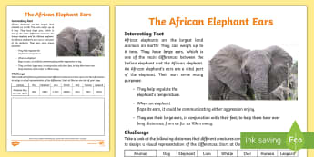 African Elephant Ears Worksheet / Activity Sheet - NS, wild animals, African animals, interesting facts, hearing, senses, data handling