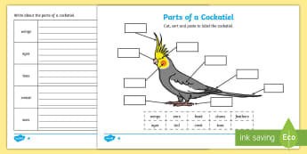 Parts of a Cockatiel Differentiated Activity Sheets-Australia - cockatiel, Australian animals, animal parts, labeling animals, Australian Curriculum Biological scie