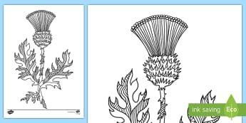 Thistle Mindfulness Colouring Page -  Flower, Prickles, Purple, Scottish, scotland, Symbolism, Mindfulness,Scottish