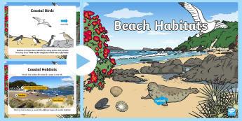 KS1 Beach Habitat Information PowerPoint - Seaside, Animals, Where, Live, Home, Facts, Non-fiction
