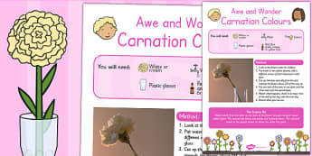 Carnation Colours Awe and Wonder Science Activity - science