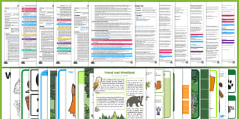 EYFS Forest and Woodland Adult Input Planning and Resource Pack - EYFS, Early Years Planning, Adult Led, Forests, Woodlands, Trees, Leaves, British Wildlife, Woodland