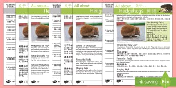 Hedgehogs Differentiated Reading Comprehension Activity English/Mandarin Chinese - Hedgehogs Reading Comprehension - hedgehog, reading comprehension, hedghog, comprehesion, hedghogs,