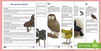 New Zealand Extinct Birds Fact Sheet Pack - Aotearoa, native birds, extinct, Year 1-3, birds, file