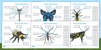 Parts of an Insect Labelling Worksheets - Insect, body parts, minibeasts, minibeast, activity, labeliing, fine motor skills, antenna, abdomen, eye, head, leg, thorax, wing