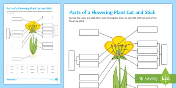 Parts of a Flowering Plant Cut and Stick Activity Sheet - plant, flower, parts of a plant, parts of a flower, flowering plant, label a flower, label a plant,