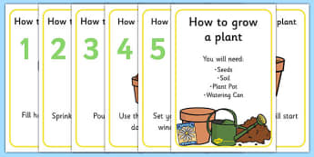 How to Grow a Plant Display Posters - Plant, Growth, Topic, Foundation stage, Flower, knowledge and understanding of the world, investigation, living things, labelling, labelling plant