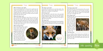Foxes Differentiated Fact File - meaning, English, comprehension, facts, reading, animals, foxes
