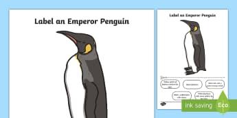 Label an Emperor Penguin Worksheet / Activity Sheet - penguin, activity