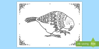 Kakapo Mindfulness Colouring Page - New Zealand Mindfulness, kakapo colouring, kakapo, colouring