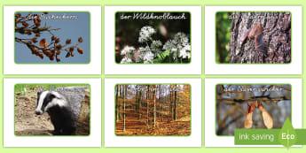 Natur und Wildtiere Fotos für die Klassenraumgestaltung - Wald, Tiere, Wildtiere, Waldtiere, Fotos, Klassenraumgestaltung, Fuchs, Dachs, Bucheckern, German