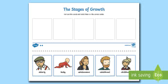 Human Life Cycle Cut and Stick Activity - Human Stages of Growth