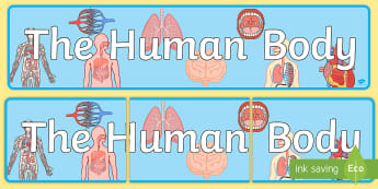 The Human Body Display Banner - display, banner, human, body, bulletin board, science, my body, skeleton,
