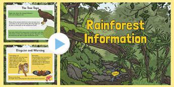 Rainforest Information PowerPoint - rainforests, rainforest information, rainforest worksheet, rainforest powerpoint, habitats, ks2