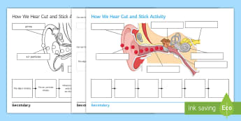How We Hear Cut and Stick Activity Sheet - Cut and Stick, hearing, how we hear, ear, the ear, listening, parts of the ear, sound, vibration, vi