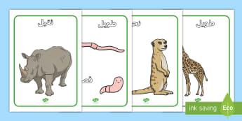 (ملصقات عرض مقارنة الحجوم ( كلمات و صور - ملصقات عرض مقارنة الحجوم (كلمات و صور) - مقارنة الحجوم, ح