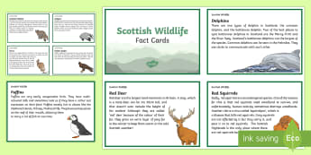 Scottish Wildlife Fact Cards - CfE Scottish Wildlife Resources, facts, information cards, puffin, wildcat, hare, red squirrels, bad