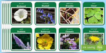 Plants and Flowers Flashcards Arabic - Arabic/English  - Plants and Flowers Flash Cards , knowledge and understanding of the world, investigation, living thi