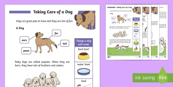 How To Take Care of a Dog KS1 - Pets, pet, EYFS, KS1, take, care, look, after, family, member, members, vet, vet surgery, surgery, i