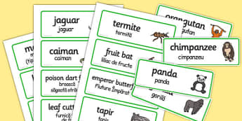 Rainforest Explorer Role Play Word Cards Romanian Translation