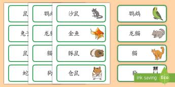 宠物主题词汇卡片 - 宠物,动物,猫,狗,兔子,鼠,词汇卡片