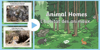 Animal Homes PowerPoint English/French - Animal Homes Powerpoint - animal homes, animal habitats, where animals live, where different animals