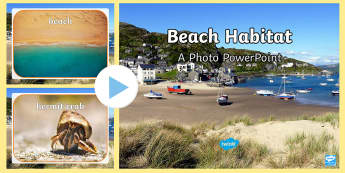 Beach Habitat Photo PowerPoint - Seaside, Animals, Where, Live, Home, Real, Pictures, Coast