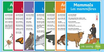 Animal Groups Poster English/French - Animal Groups Display Poster Photos - animal groups, display, EAL French,French-translation