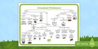Grassland Minibeasts Map Reference Sheet - minibeast map, minibeast information, minibeast facts, minibeasts, minibeast, minibeast diagram, types of minibeasts, grassland