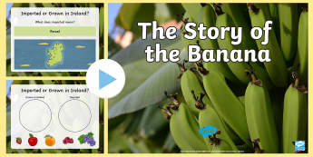 The Story of the Banana PowerPoint - geography, climate, imports, fair trade, origin, growing, agriculture