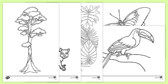Rainforest Themed Colouring Sheets - kapok tree, the great kapok tree, rainforest themed, colouring, colour, sheets