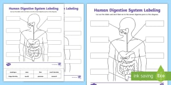 Human Body Systems - 4th Grade Science Teaching Resources