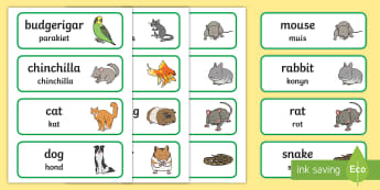 Pets Topic Word Cards English/Afrikaans - Cat, dog, birds, nature, tame, fish, literacy, EAL