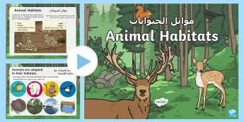 Animal Habitats PowerPoint Arabic/English - Animal Habitats Powerpoint - powerpoint, power point, interactive, powerpoint presentation, animals,