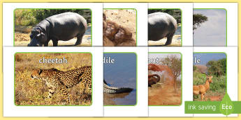 Safari Animals Display Photos - Display Posters, Safari,  A4, display, safari, lion, cheetah, puma, jaguar, rhino, hippo, elephant