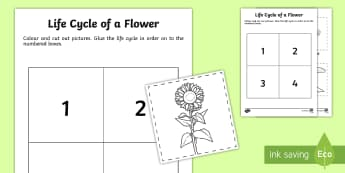 Life Cycle of a Flower Cut and Paste Activity  - Early Childhood Plants, Pre-K Plants, Plants, Pre-Kindergarten Plants, K4 Plants, worksheet, 4K Plan