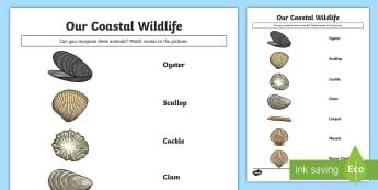 Our Coastal Wildlife - Shells Match and Draw - Science Week, 10/03/17, shells, coast, sea, ocean, clam, World Around Us.