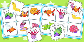 Matching Mat SEN to Support Teaching on Sharing a Shell - matching mat, sen, story book
