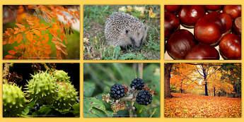 Autumn Photo Clip Art Pack - nz, new zealand, autumn, photo, pack, season, art