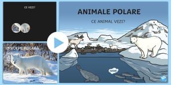 Ce animal polar vezi? - Prezentare PowerPoint - animale polare, animale de la poli, regiuni polare, poli, polar, viața la poli, română, materiale