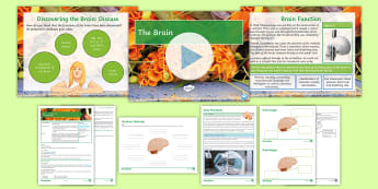 AQA Biology Unit 4.5 Lesson 6 The Brain Lesson Pack - MRI, Cerebrum, Cerebellum, medulla, stimulation