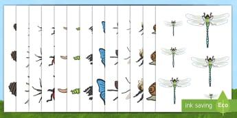 Ordenar tamaños: Los bichos - libélula, abeja, caracol, hormiga, típula, escarabajo, mariposa, oruga, gusano, mariquita, cochini
