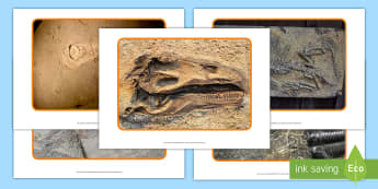 Ffotograffau Ffosiliau Deinosoriaid - deinosoriaid, lluniau, ffosil, ffosiliaid, ffotograffau, Welsh