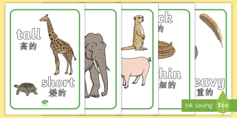 Size Comparison Display Posters English/Mandarin Chinese - Size Comparison Display Posters (Word and Picture) - size comparison, sizes, comparing, display, pos