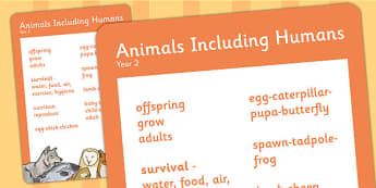 Year 2 Animals Including Humans Scientific Vocabulary Poster