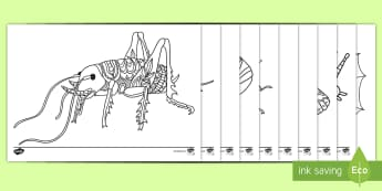 New Zealand Bugs and Insects Mindfulness Colouring Pages - New Zealand, Aotearoa, insects, bugs, mindfulness, colouring, Years 0-3
