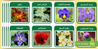 بطاقات تعليمية: نباتات وزهور Arabic - بطاقات تعليمية لبعض النباتات والزهور  للتعرف عليها وفه