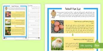 دورة حياة الدجاجة نشاط للفهم القرائي - الدجاج، دجاجة، كتاكيت،كتكوت،فرخ، أفراخ،صيصان، عربي،