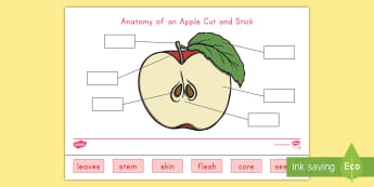Anatomy of an Apple Cut and Stick Activity Sheet - apple, apples, anatomy of an apple, life cycle of an apple, apple life cycle, fall, worksheet